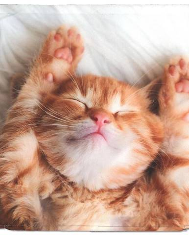 Obliečka na vankúš mačka 40x40 oranžová